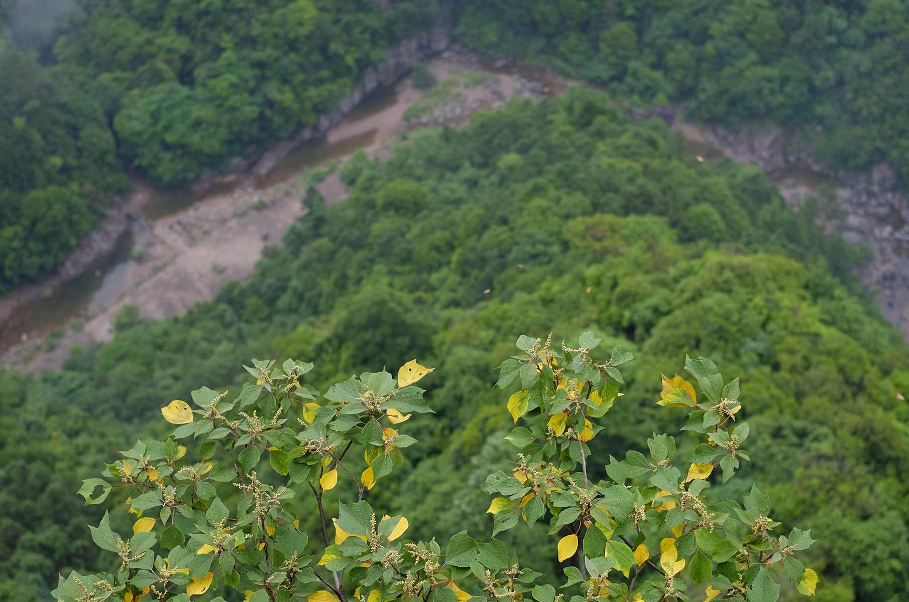 Yandang Nationalpark, Wenzhou